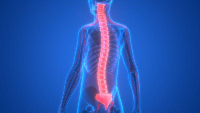 biópsia de medula óssea